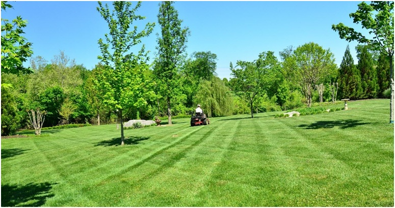 Why It Is Necessary to Allocate A Lawn Care Service